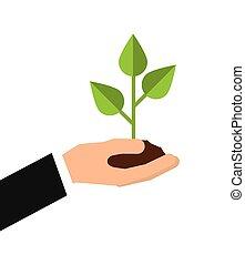 植物, 成長, 葉子, 圖象
