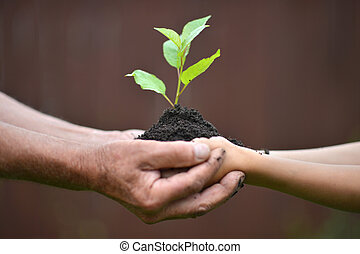 植物, 手を持つ