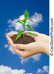植物, 手