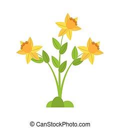 植物, 春天, 水仙, 花