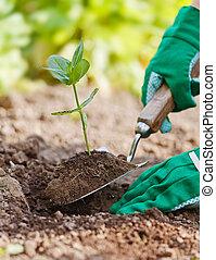 植物, 是, 種植, 在, 花園