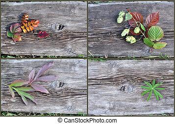 植物, 木製である, 古い, 板