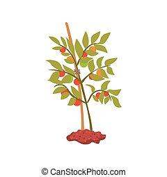 植物, 木, 若い, イラスト, ベクトル, 漫画, 地面