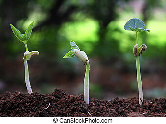 植物, 植物, 肥沃, 序列, 土壤, 樹, 成長, /, 生長, 萌芽