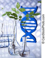 植物, 検査しなさい, 科学者