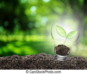 植物, 概念, ライト, 中, soil., 環境, 成長する, 電球, ジャム