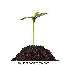 植物, 概念, 生活, 若い, 新しい, 地球