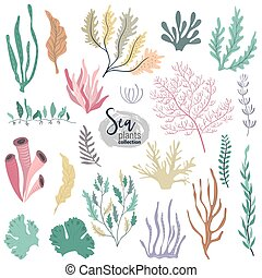 植物, 水中, カラフルである, 珊瑚, コレクション, 海洋, ベクトル, 砂洲