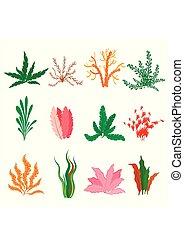 植物, 水中, 水族館, セット, seaweeds., コレクション, バックグラウンド。, 水生, ベクトル, イラスト, 海, 白, algae., 海洋, タイプ, 海草