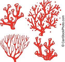 植物, 水中, 珊瑚, セット, 砂洲