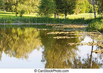 植物, 水 ユリ, 水生, 池