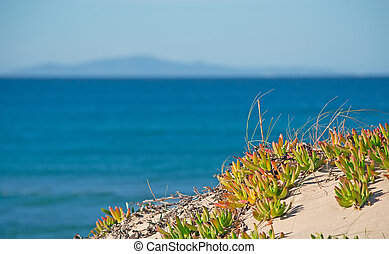 植物, 海