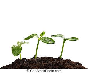 植物, 生活, 概念, 若い, 新しい, 地球