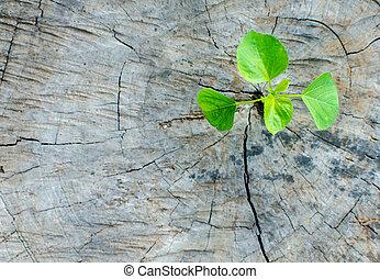 植物, 生長, 上, 樹殘干