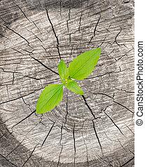 植物, 生长, 在上, 树树桩