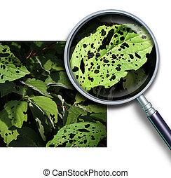 植物, 疾病