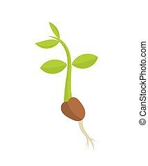 植物, 発芽, 実生植物