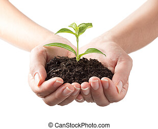 植物, -, 白い背景, 手
