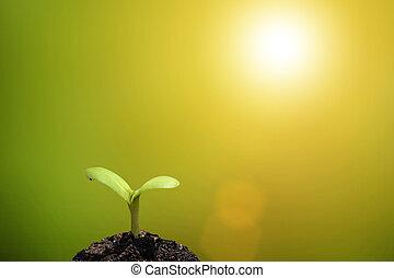 植物, 秧苗, 生長, 上, 肥沃, 土壤