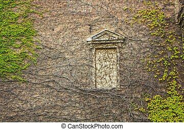 植物, 窓, 囲まれた, はうこと, ツタ