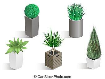 植物, 等大, セット, 別