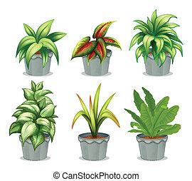 植物, 緑の葉が多い
