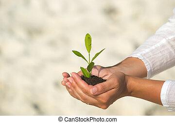 植物, 緑, 手を持つ