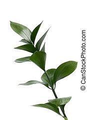 植物, 绿色