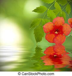 植物, 自然, 反映, 水, 背景, spa