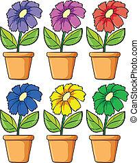 植物, 花が咲く, ポット