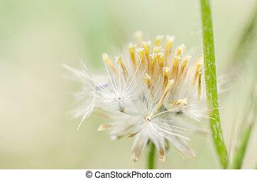 植物, 花
