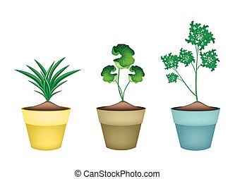 植物, 花, セラミック, ポット, 3, 草, 新たに