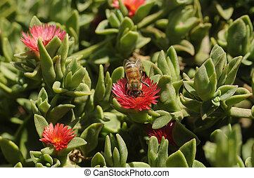 植物, 花, 果汁, 労働者, 収集, 氷, 蜂