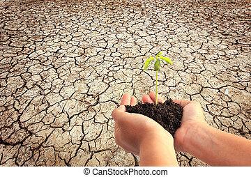 植物, 若い, 土壌, 背中, 手ざわり, 手の 保有物, 地球, 割れた