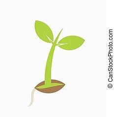 植物, 若い, 実生植物
