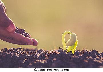 植物, 若い, 手, 種, 成長, 保有物, 緑