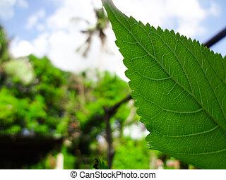 植物, 草木の栽培場, 風景, 葉, 庭, スペース, エコロジー, 緑, 自然, 自然, ぼんやりさせられた, 概念, クローズアップ, 背景, 新たに, 使うこと, コピー, 壁紙, 光景