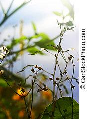 植物, 葉