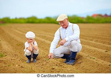 植物, 農夫, 家族, 点検, ∥(彼・それ)ら∥, 成長, 土地