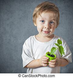 植物, 面白い, 小さい 男の子, 窓, 肖像画