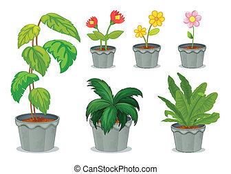植物, 6, ポット