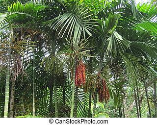 植物, bridgetown, 庭