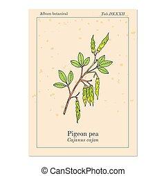 植物, cajanus, ハト, cajan, 薬効がある, エンドウ豆
