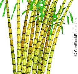 植物, cane., 砂糖