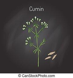 植物, cumin, 芳香がする