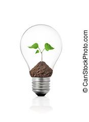 植物, eco, ライト, 中, 緑, 電球, concept: