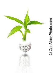 植物, eco, ライト, 中, 電球, concept: