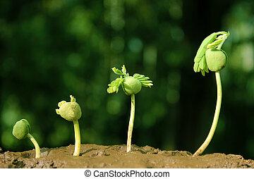 植物, growth-stages