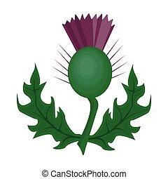 植物, illustration., あざみ, シンボル, スタイル, 単一, ベクトル, 緑, scotland.scotland, アイコン, 漫画, leaves.medicinal, 株