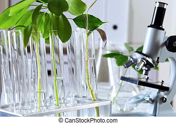 植物, laborotary, 生物学, 緑
